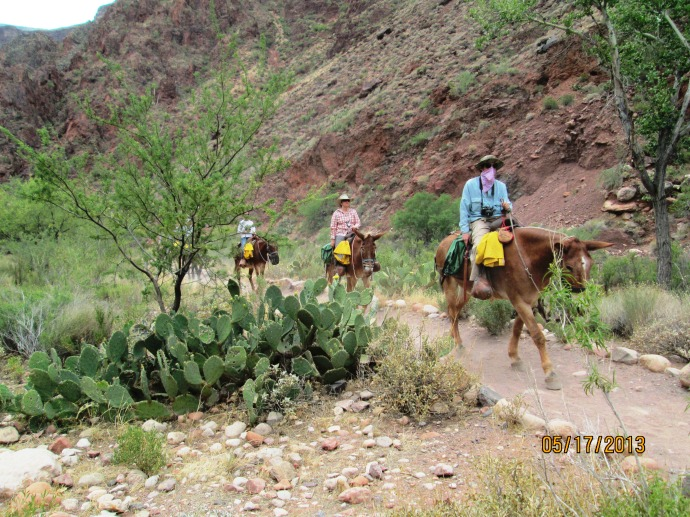 Heading out of the Phantom Ranch.   Horses coming in to the Ranch to stay overnight!