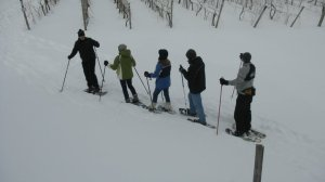 "Snowshoeing the grape vinyards with ""Nature's Fitness""  Renting shoes is a great option"
